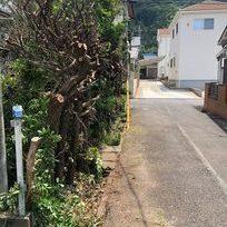 静岡県富士市で伐採作業